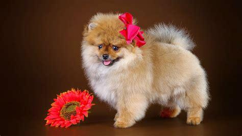 im 225 genes de animales im 225 genes de perros chistosos imgenes y fotos de animales fotos hermosas de animales