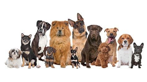 best family dogs large large family 4k wallpaper free 4k wallpaper