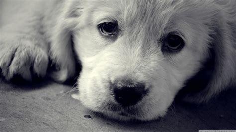 imagenes wallpapers hd animales 50 fondos de pantalla con mascotas para whatsapp del 29 de