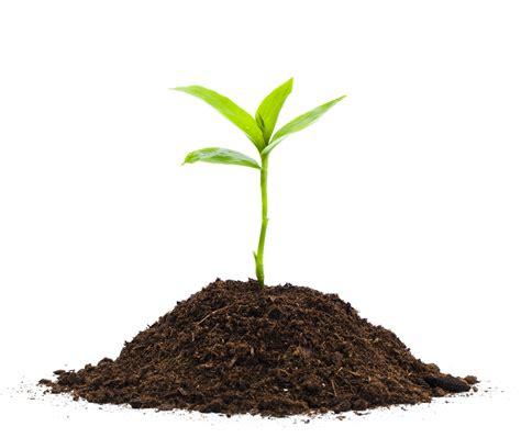 seedling seedlings