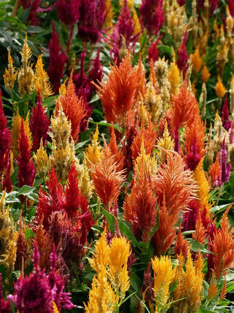 botanica fiori immagini fiore autunno botanica flora fiore di