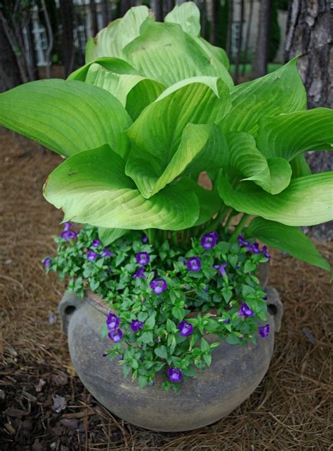 best flowers for small pots 401 best images about gardening on pinterest shade