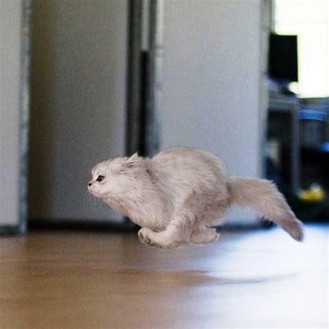 imagenes locas en movimiento el mundo de michin los comportamientos del gato