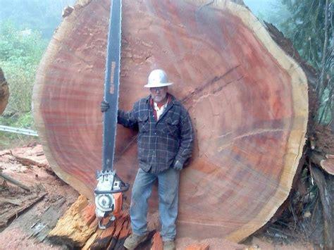 Mit Freundlichen Grüßen Zu Nett Kleine S 228 Ge Kleiner Baum Gro 223 E S 228 Ge Motors 228 Portal