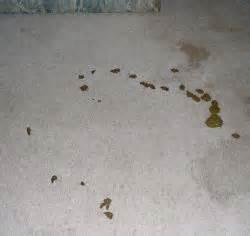 Poo On Carpet Pet Odor Removal Recipe