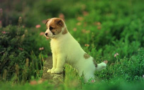 imagenes originales de animales listado de nombres bonitos para perros machos
