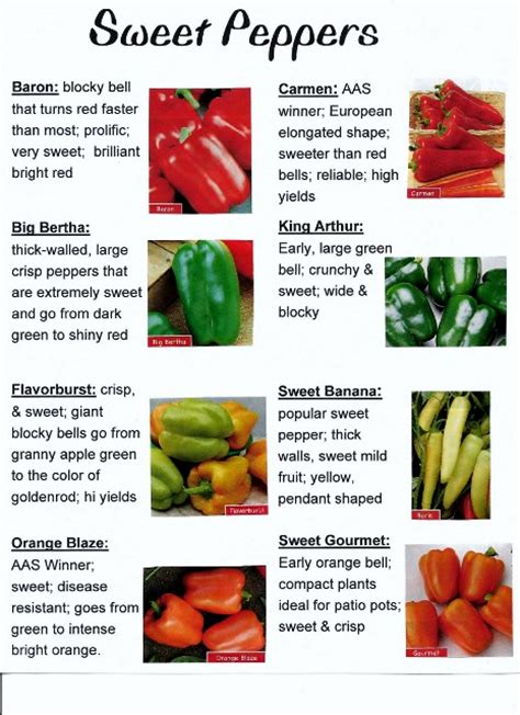 types of garden peppers 2013 heirloom tomato and pepper varieties at heathglen s