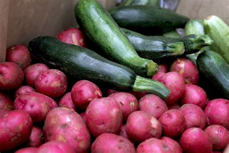vegetables to america vegetables tension grow on hmong american farm