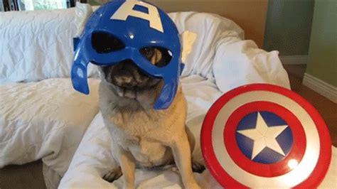 captain america pug une premi 232 re image pour captain america 2