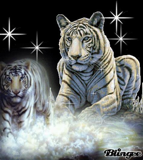 imagenes tumblr de tigres fotos animadas tigres para compartir 86395831 blingee com
