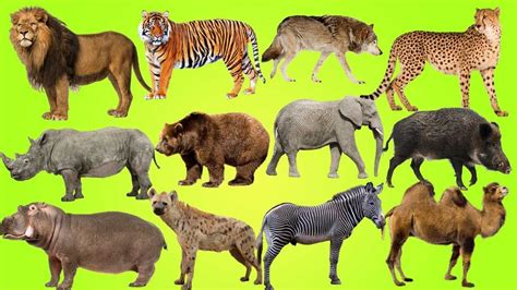 wild animals of the wild animals pictures hd pics backgrounds learn names and sounds with cartoon characters of