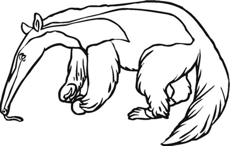 anteater 5 coloring page supercoloring com