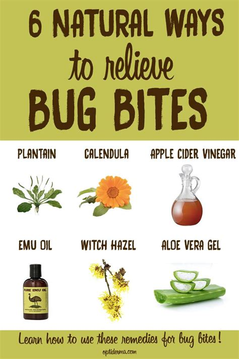 insect bite blister ideas  pinterest hiking tips hunting season  mosquito bite