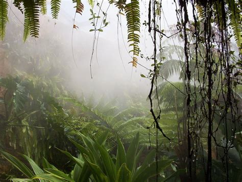 jungle themes for powerpoint jungle backgrounds wallpaper cave
