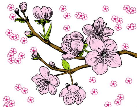 fiori di ciliegio stilizzati murales decorazione fiori di ciliegio stilizzati