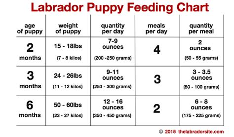 puppy food chart feeding your labrador puppy guide and diet chart