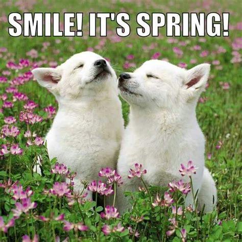 Spring Meme - spring funny animal quotes quotesgram