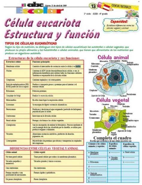 estructura de la clula eucariota c 233 lula eucariota estructura y funci 243 n edicion impresa