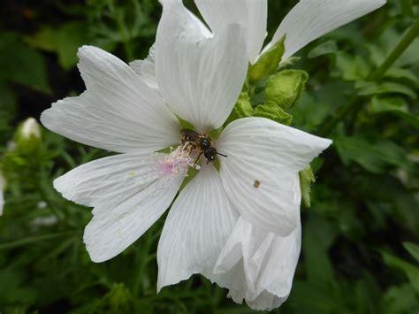 wann sommerblumen pflanzen sommerblumen s 228 en anleitung und wann