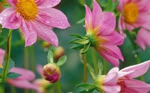 Beautiful Spring by Beautiful Spring Spring Wallpaper 27865638 Fanpop