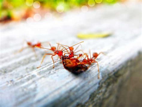 Was Hilft Gegen Ameisen 3890 by Die Besten Und Effektivsten Hausmittel Gegen Ameisen In