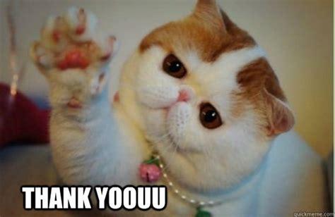 Thank You Cat Meme - thank you memes quickmeme