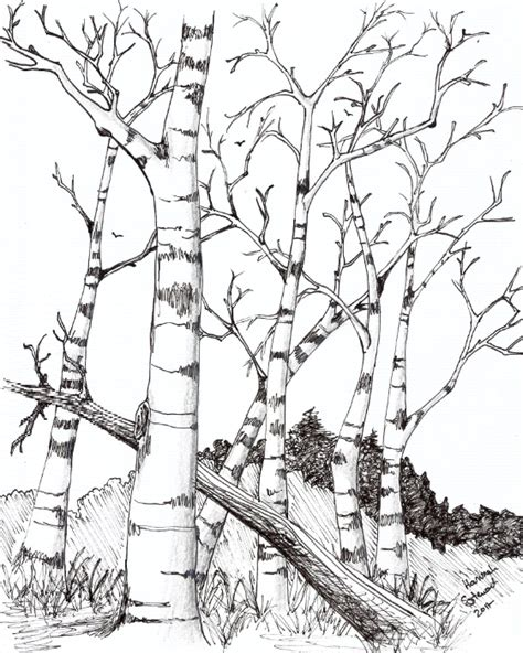 birch tree coloring page birch trees by theemberraven on deviantart