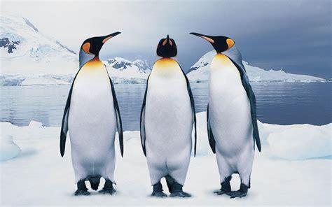 Abstrak Pinguin 1 penguin wallpaper 2560x1600 74936