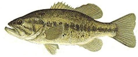 bass fishing home page click here to learn about bassdozer