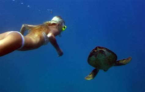 best place to dive the great barrier reef snorkeling diving cairns trips