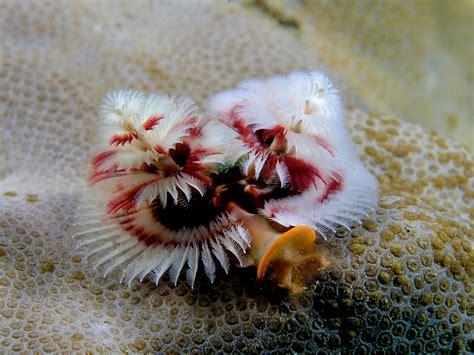 list of marine aquarium invertebrate species wikiwand