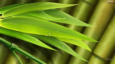 wallpaper daun bambu bamboo drops water leaf plants wallpapers 1920x1080