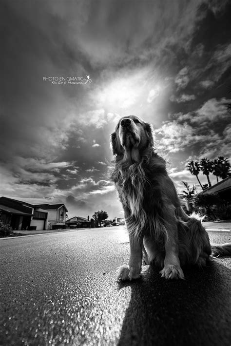 best black and white photo black and white photography