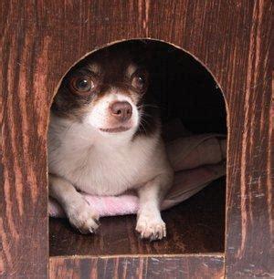 chihuahua dog houses chihuahua dog home dog breeds picture