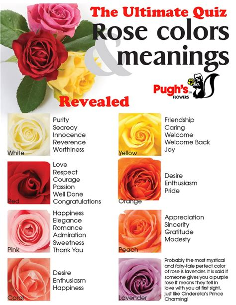 roses colors meaning flower color meanings