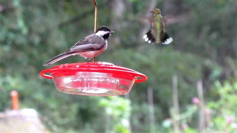 best 28 why do hummingbirds stop coming to feeders