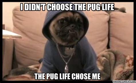 Pug Memes - pug life meme memes