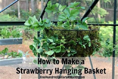 9 unbeatable diy ideas for growing strawberries in a