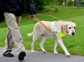 dogs for the blind facts about guide dogs from goats to soaps