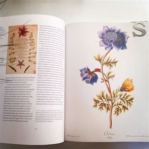 flora illustrata great works 0300196628 11 best images about books worth reading on shops sacks and new york city