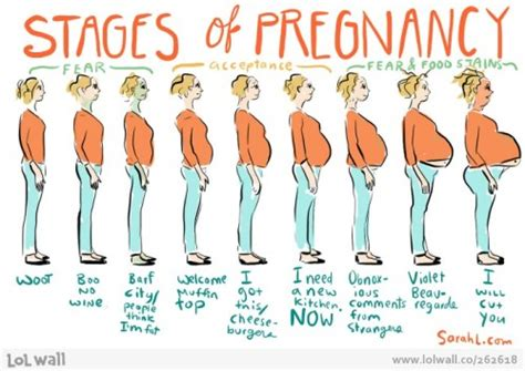 pregnancy stages 10 interesting pregnancy facts my interesting facts