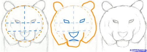 how to create doodle how to draw a tiger step by step realistic drawing
