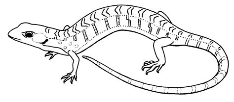 collared lizard coloring page lizard animal templates pinterest lizards and animal
