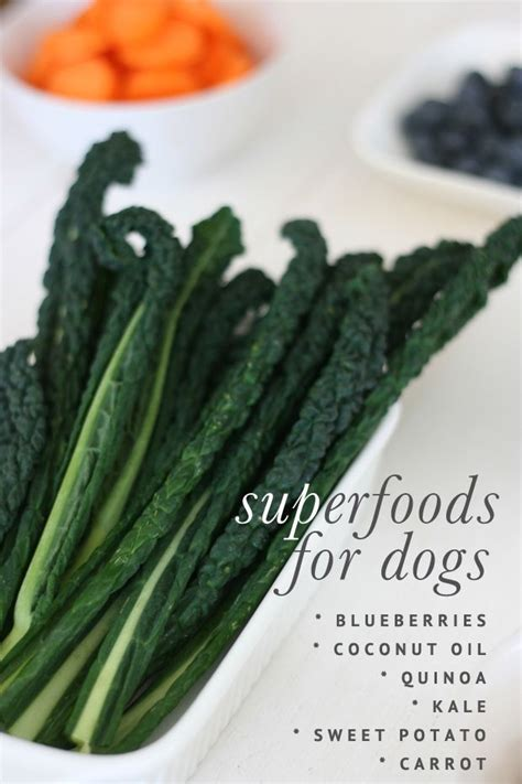 superfoods for dogs 17 best ideas about coconut dogs on coconut for dogs
