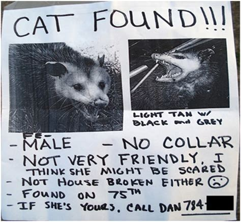Lost Cat Flyer Joke