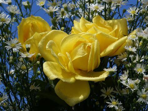 imagenes de flores rojas y amarillas flores rosas rojas y amarillas car interior design