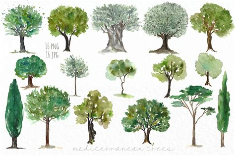 the sixteen trees of trees mediterranean clip art by labfcreations thehungryjpeg com