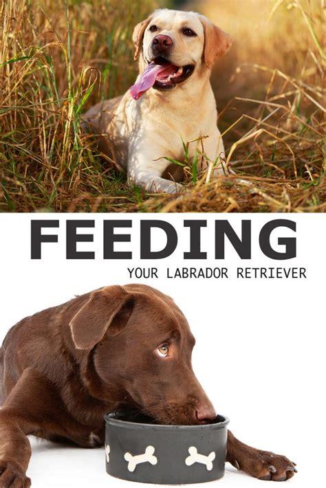 can puppies drink regular milk labrador food chart