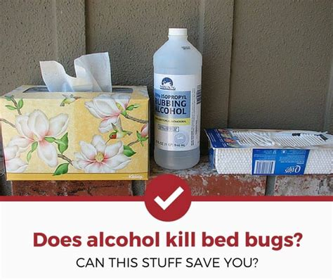 does alcohol kill bed bugs does rubbing alcohol kill bed bugs possibly click to