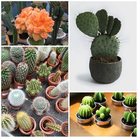 succulent facts unknown cactus 6 interesting facts
